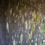 Jamestown Texture #2881