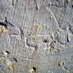 Jamestown Texture #2885
