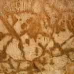 Jamestown Texture #2895